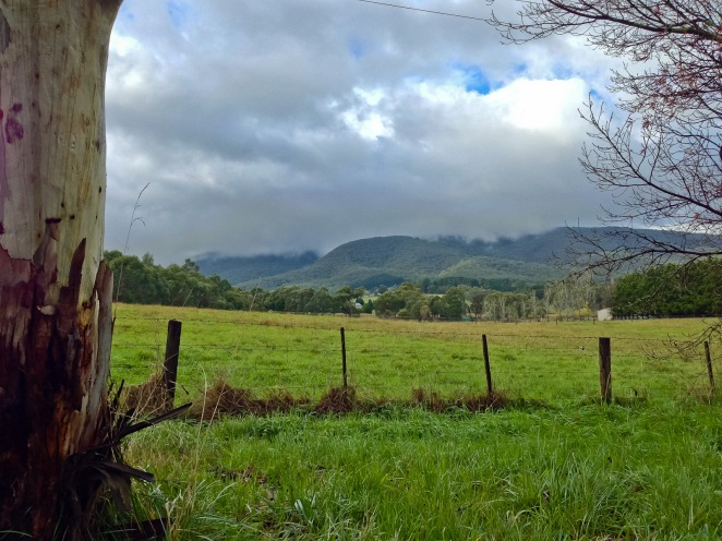Mt. Toolebewong from the valley. Still enshrouded in clouds